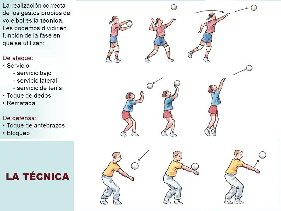 LA TÉCNICA La realización correcta de los gestos propios del voleibol es la técnica. Les podemos dividir en función de la fase en que se utilizan: De