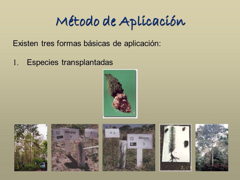 Método de Aplicación Existen tres formas básicas de aplicación: 1. Especies transplantadas