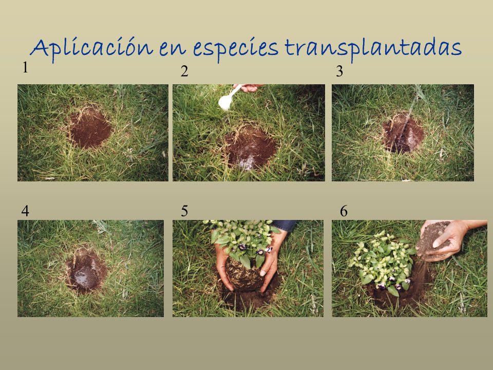 Aplicación en especies transplantadas 1 23 456