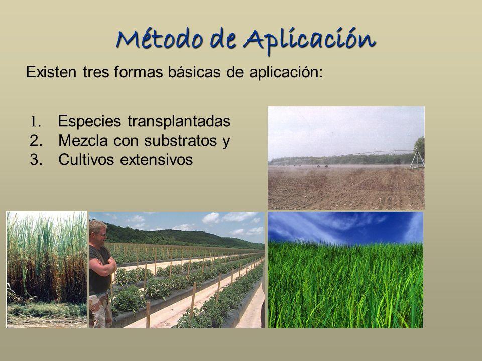 Método de Aplicación Existen tres formas básicas de aplicación: 1. Especies transplantadas 2. Mezcla con substratos y 3. Cultivos extensivos