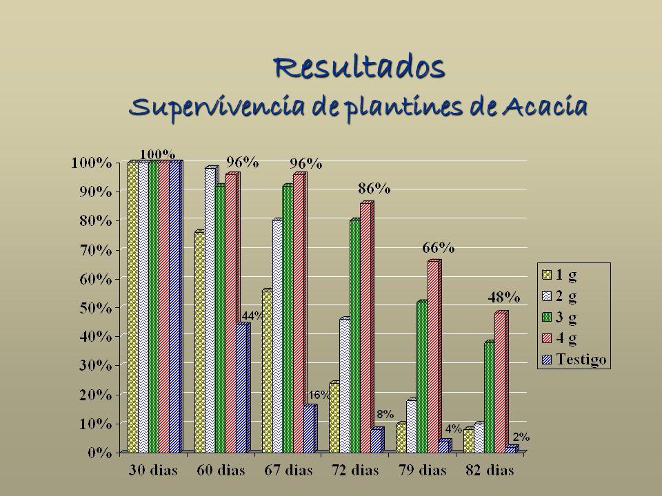 Resultados Supervivencia de plantines de Acacia