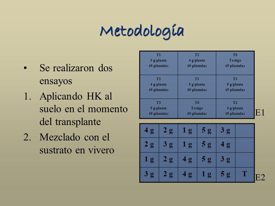 Metodología Se realizaron dos ensayos 1.Aplicando HK al suelo en el momento del transplante 2.Mezclado con el sustrato en vivero T1 3 g/planta 49 plán