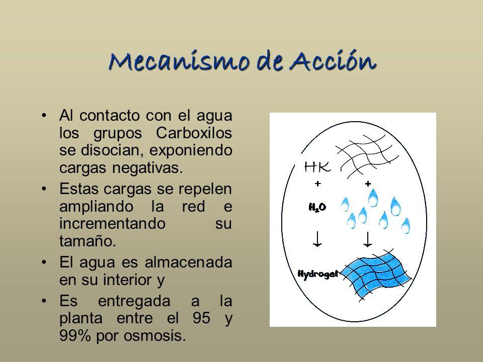 Mecanismo de Acción Al contacto con el agua los grupos Carboxilos se disocian, exponiendo cargas negativas. Estas cargas se repelen ampliando la red e