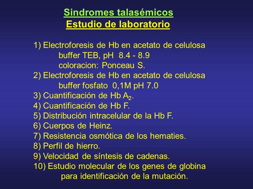 Sindromes talasémicos Estudio de laboratorio 1) Electroforesis de Hb en acetato de celulosa buffer TEB, pH 8.4 - 8.9 coloracion: Ponceau S. 2) Electro