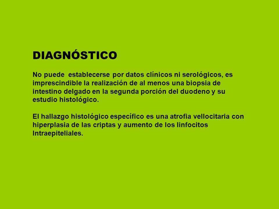 DIAGNÓSTICO No puede establecerse por datos clínicos ni serológicos, es imprescindible la realización de al menos una biopsia de intestino delgado en