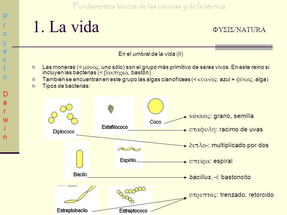 1. La vida ΦΥΣΙΣ/NATURA En el umbral de la vida (II) Las moneras (< μνος, uno sólo) son el grupo más primitivo de seres vivos. En este reino si incluy