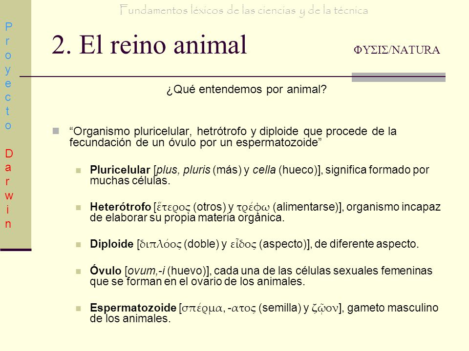 2. El reino animal ΦΥΣΙΣ/NATURA ¿Qué entendemos por animal? Organismo pluricelular, hetrótrofo y diploide que procede de la fecundación de un óvulo po