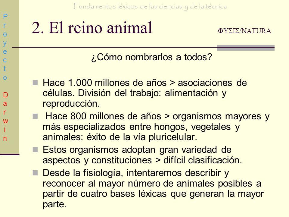 2. El reino animal ΦΥΣΙΣ/NATURA ¿Cómo nombrarlos a todos? Hace 1.000 millones de años > asociaciones de células. División del trabajo: alimentación y