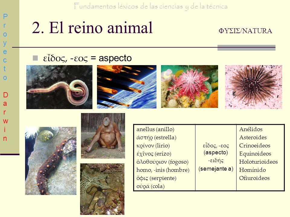 2. El reino animal ΦΥΣΙΣ/NATURA εδος, -εος = aspecto Proyecto DarwinProyecto Darwin Fundamentos léxicos de las ciencias y de la técnica anellus (anill