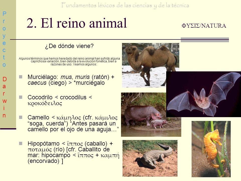2. El reino animal ΦΥΣΙΣ/NATURA ¿De dónde viene? Algunos términos que hemos heredado del reino animal han sufrido alguna caprichosa variación, bien de