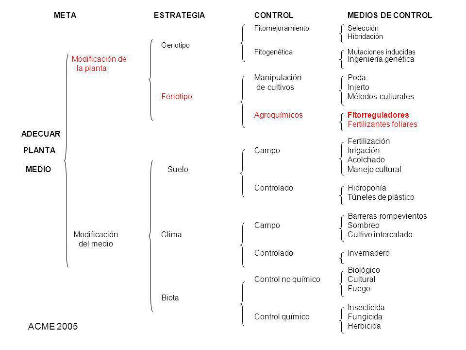 ACME 2005 META ESTRATEGIA CONTROL MEDIOS DE CONTROL FitomejoramientoSelección Hibridación Genotipo Fitogenética Mutaciones inducidas Modificación de I