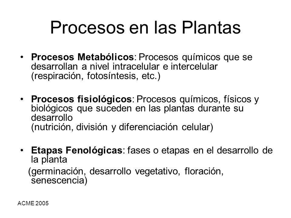 ACME 2005 Procesos en las Plantas Procesos Metabólicos: Procesos químicos que se desarrollan a nivel intracelular e intercelular (respiración, fotosín