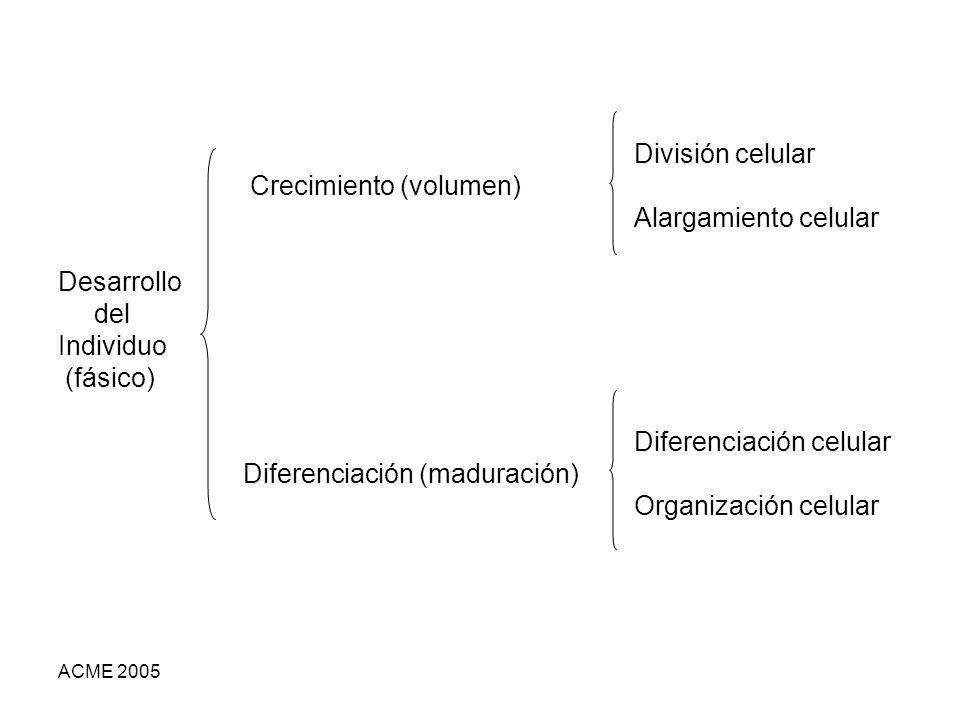 ACME 2005 División celular Crecimiento (volumen) Alargamiento celular Desarrollo del Individuo (fásico) Diferenciación celular Diferenciación (maduración) Organización celular