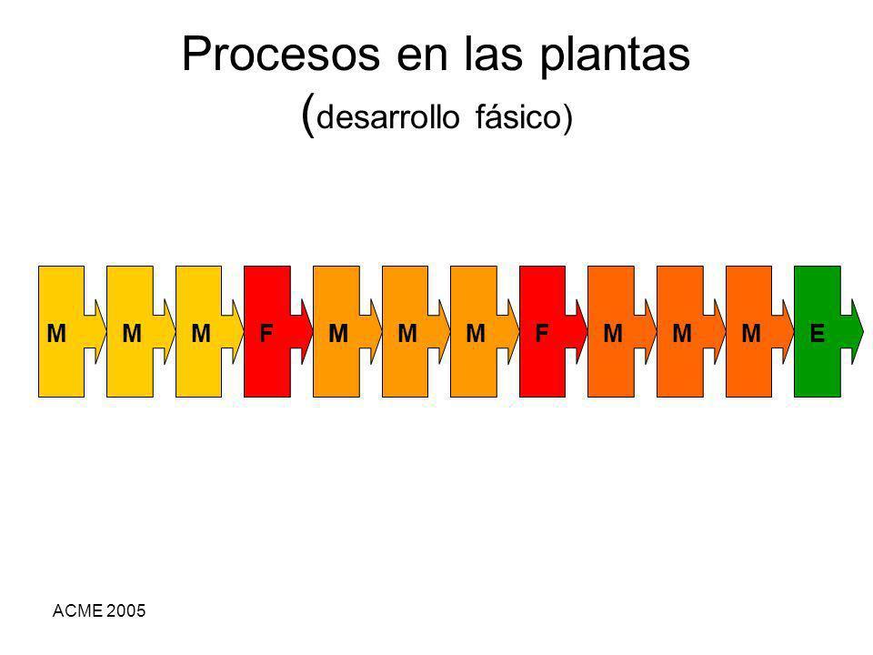 ACME 2005 Procesos en las plantas ( desarrollo fásico) MMMMMMMMMMFFE