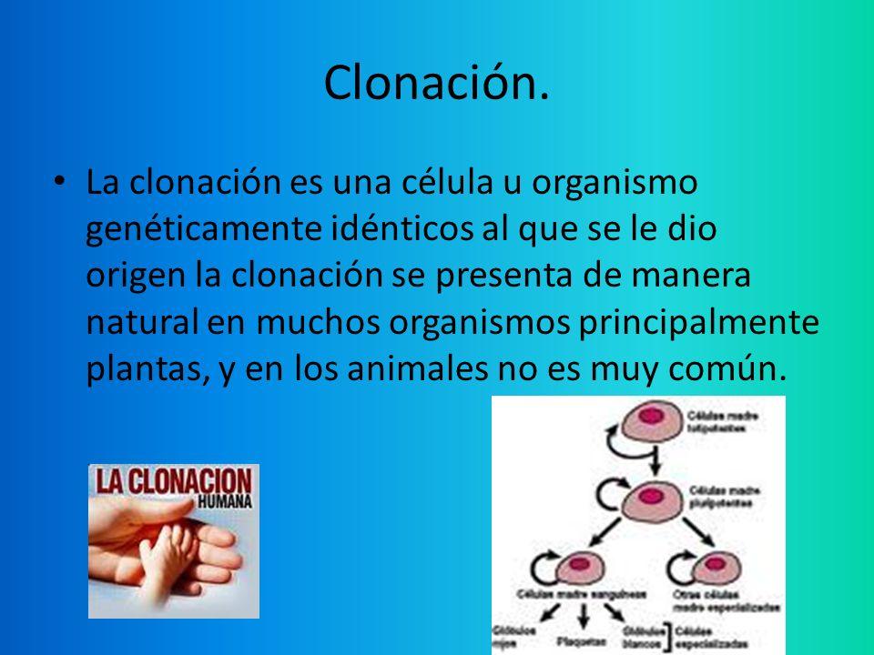Clonación. La clonación es una célula u organismo genéticamente idénticos al que se le dio origen la clonación se presenta de manera natural en muchos