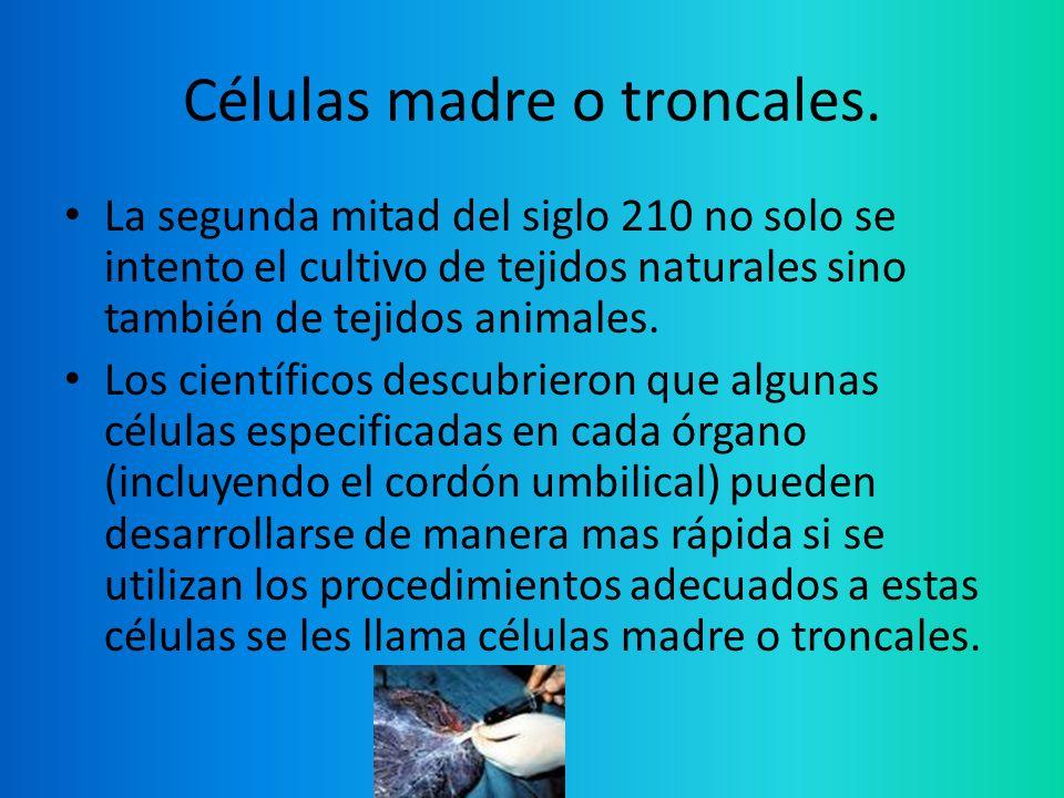 Células madre o troncales. La segunda mitad del siglo 210 no solo se intento el cultivo de tejidos naturales sino también de tejidos animales. Los cie