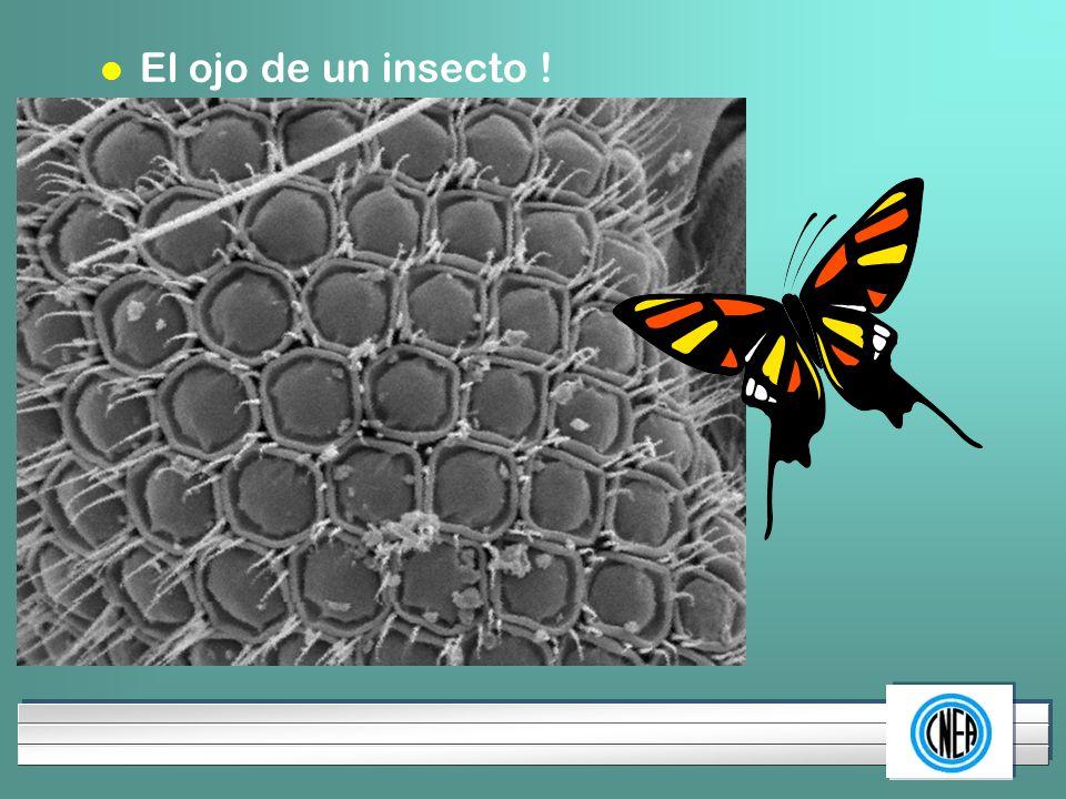LOGOTIPO DE SU EMPRESA l El ojo de un insecto !