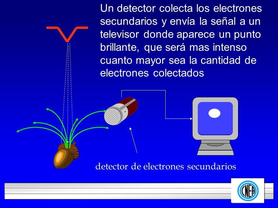 LOGOTIPO DE SU EMPRESA Un detector colecta los electrones secundarios y envía la señal a un televisor donde aparece un punto brillante, que será mas i