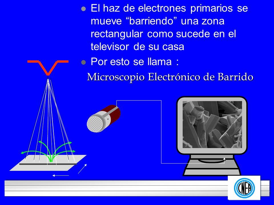 LOGOTIPO DE SU EMPRESA l El haz de electrones primarios se mueve barriendo una zona rectangular como sucede en el televisor de su casa l Por esto se l