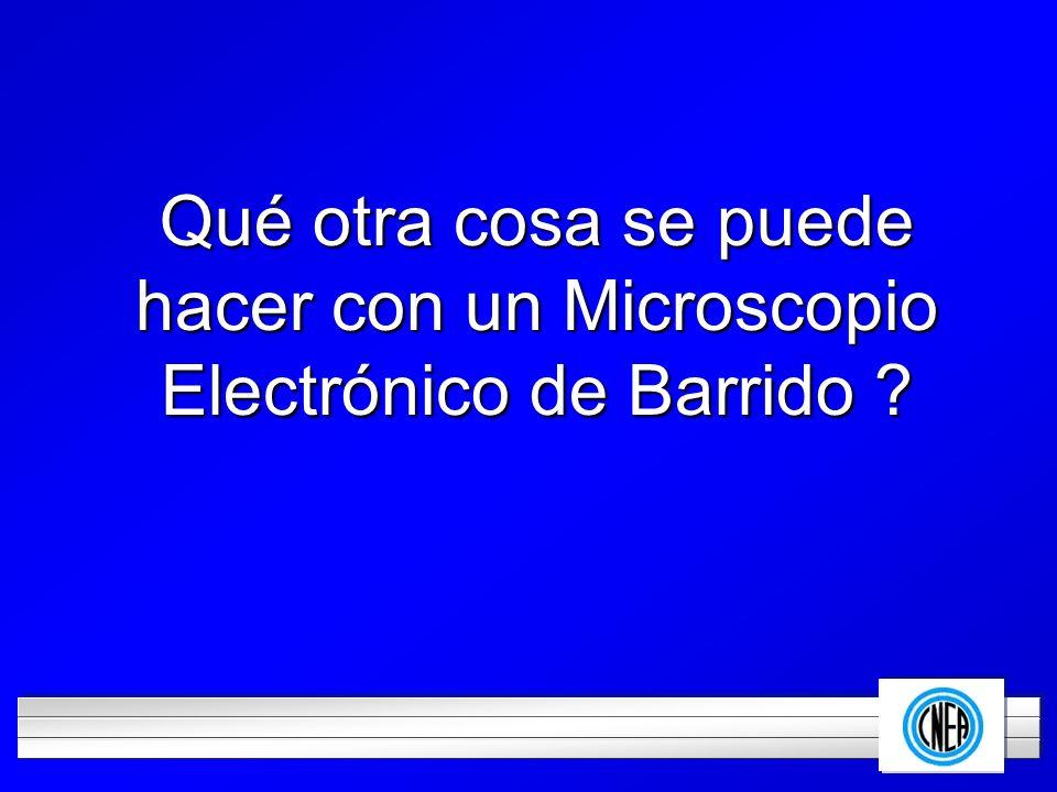 LOGOTIPO DE SU EMPRESA Qué otra cosa se puede hacer con un Microscopio Electrónico de Barrido ?