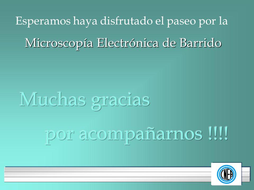LOGOTIPO DE SU EMPRESA Esperamos haya disfrutado el paseo por la Microscopía Electrónica de Barrido