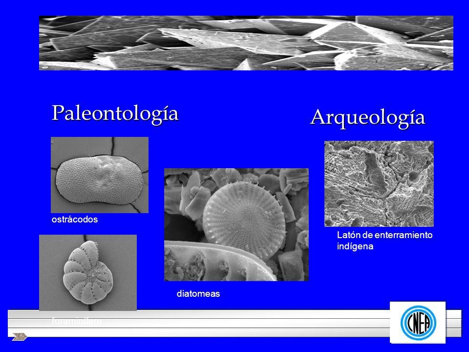 LOGOTIPO DE SU EMPRESA Paleontología Arqueología ostrácodos diatomeas Latón de enterramiento indígena foraminífero