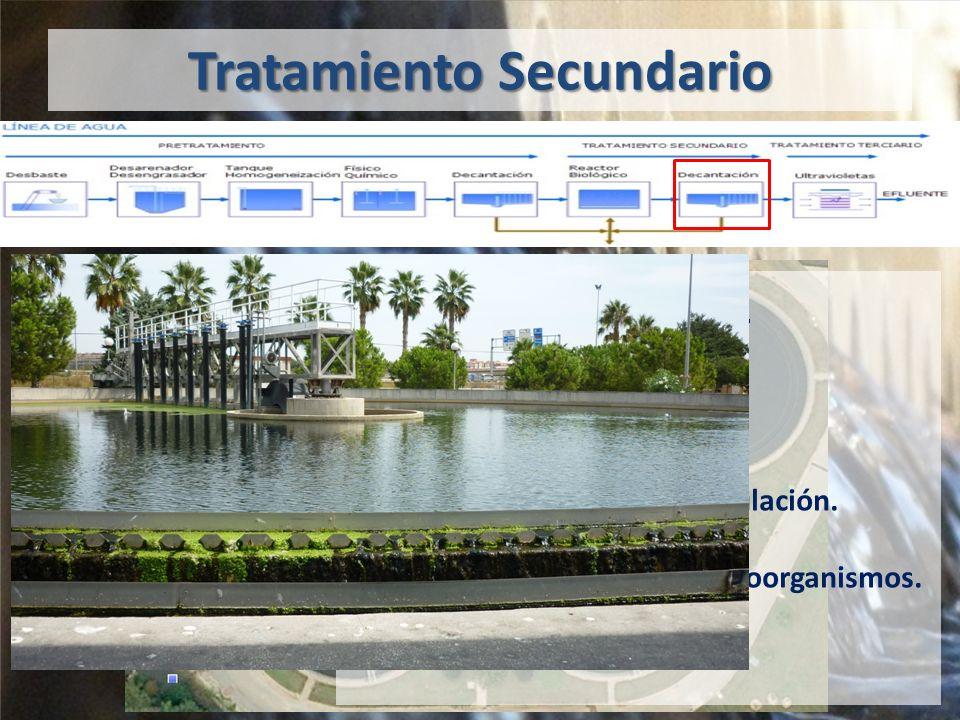 Tratamiento Secundario Decantación 3 decantadores.