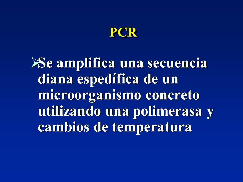 PCRPCR Se amplifica una secuencia diana espedífica de un microorganismo concreto utilizando una polimerasa y cambios de temperatura Se amplifica una s