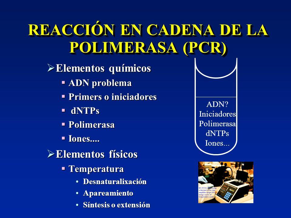 REACCIÓN EN CADENA DE LA POLIMERASA (PCR) Elementos químicos Elementos químicos ADN problema ADN problema Primers o iniciadores Primers o iniciadores