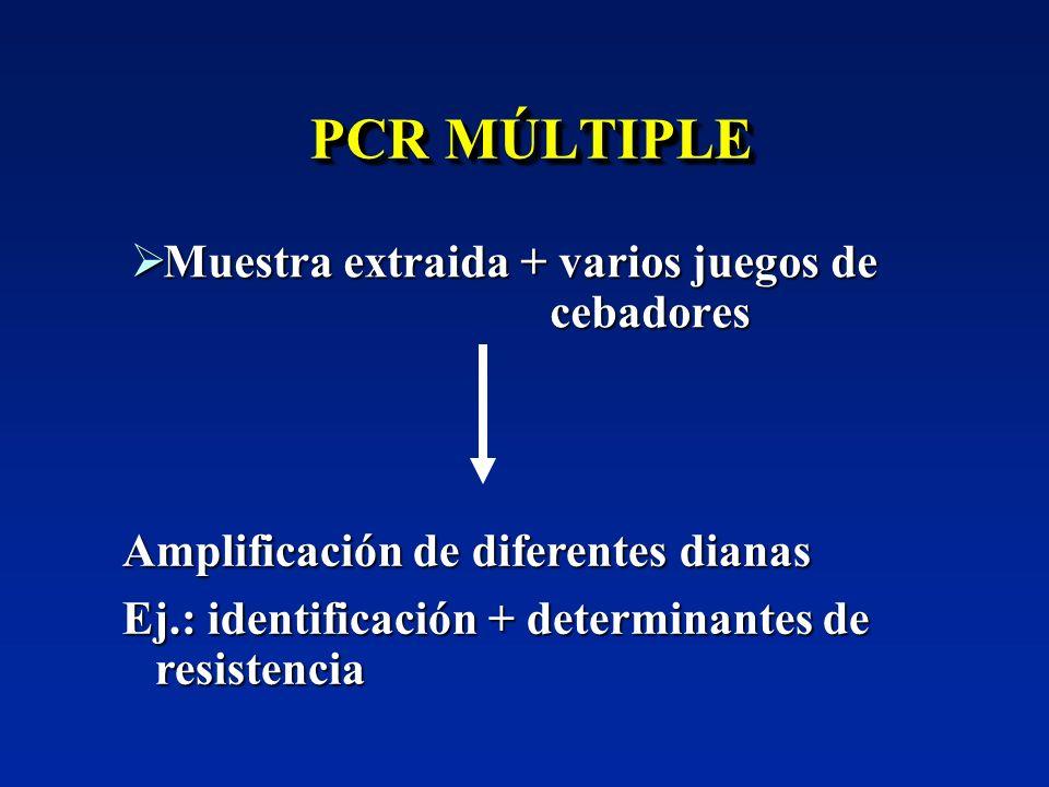 PCR MÚLTIPLE Muestra extraida + varios juegos de cebadores Muestra extraida + varios juegos de cebadores Amplificación de diferentes dianas Ej.: ident