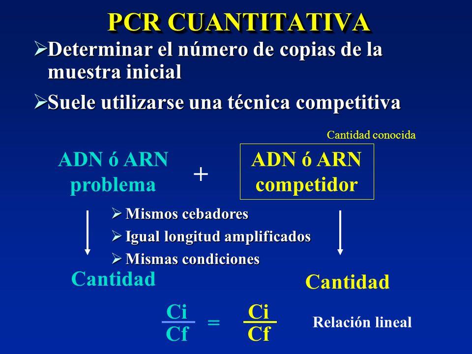 PCR CUANTITATIVA Determinar el número de copias de la muestra inicial Determinar el número de copias de la muestra inicial Suele utilizarse una técnic