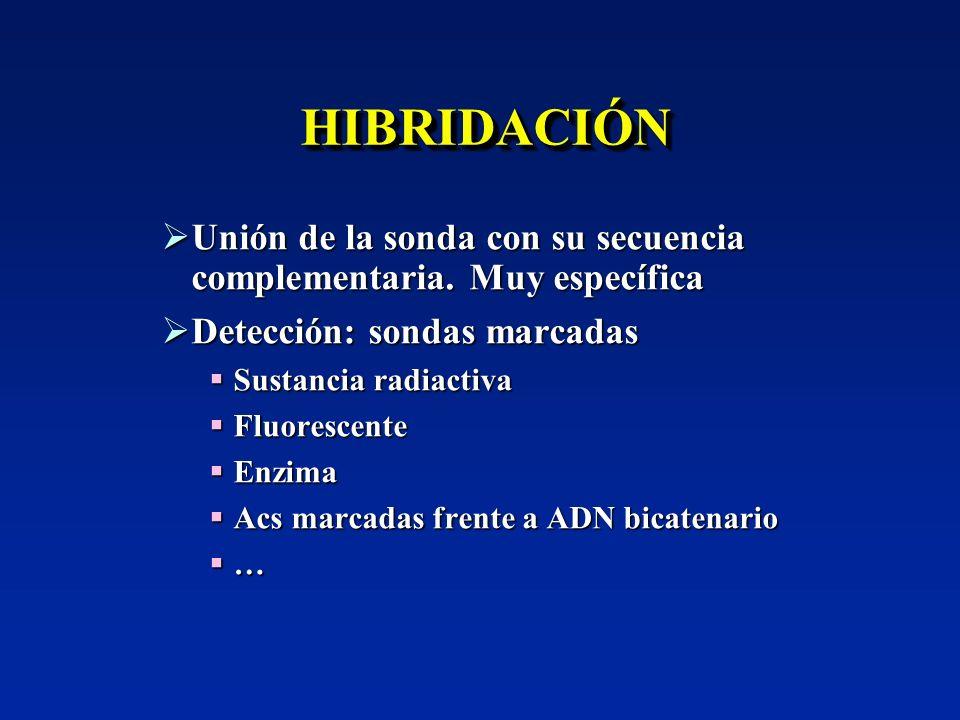 HIBRIDACIÓNHIBRIDACIÓN Unión de la sonda con su secuencia complementaria. Muy específica Unión de la sonda con su secuencia complementaria. Muy especí