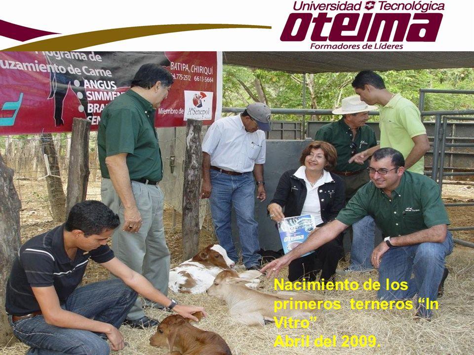 Nacimiento de los primeros terneros In Vitro Abril del 2009.