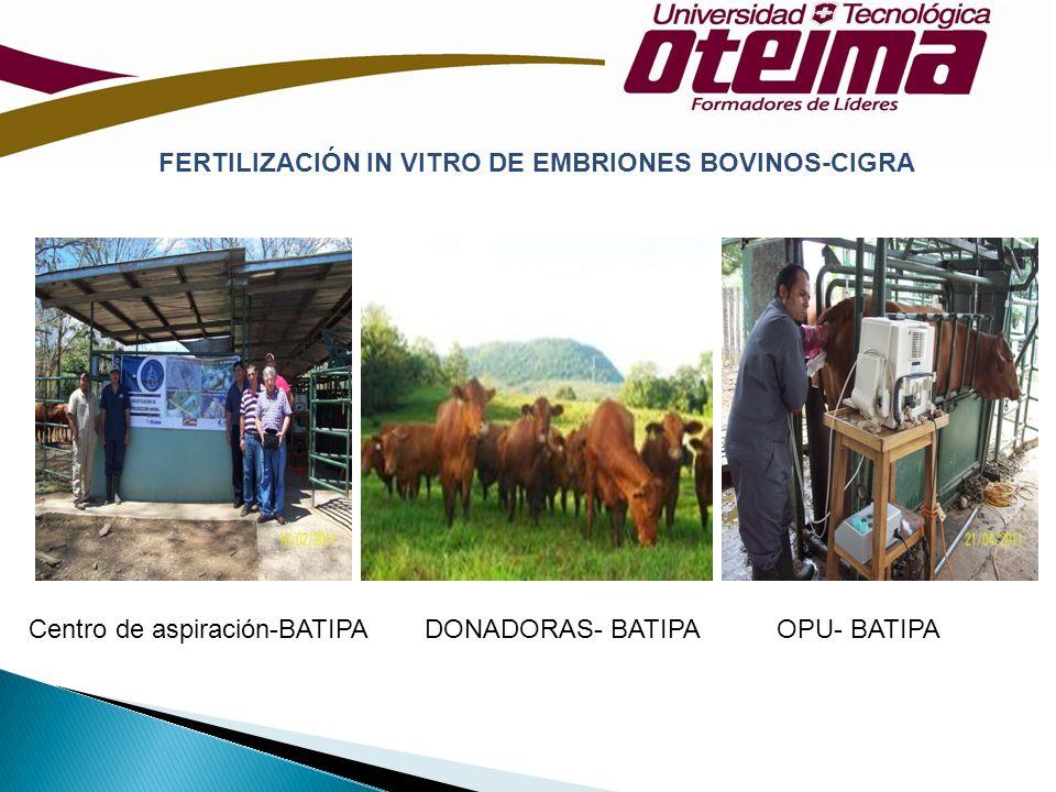 FERTILIZACIÓN IN VITRO DE EMBRIONES BOVINOS-CIGRA Centro de aspiración-BATIPAOPU- BATIPADONADORAS- BATIPA