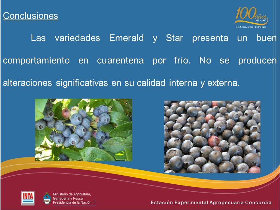 Conclusiones Las variedades Emerald y Star presenta un buen comportamiento en cuarentena por frío.