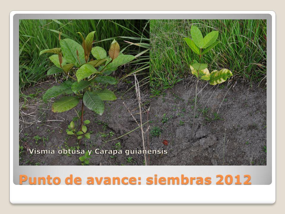 Punto de avance: siembras 2012