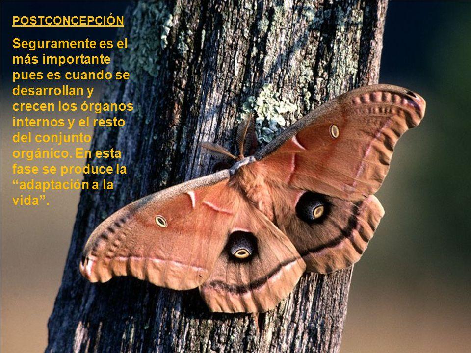 PRECONCEPCIÓN Y CONCEPCIÓN En ese inicio de la vida confluyen las TRES ENERGÍAS FUNDAMENTALES (tres funciones de la energía vital).