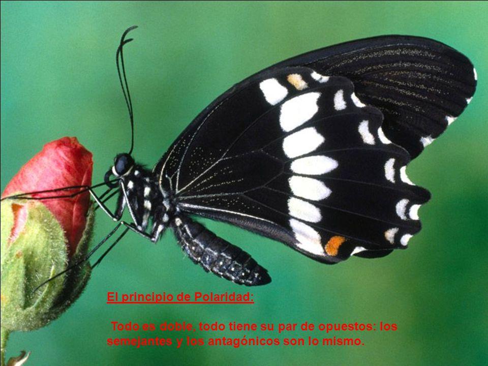 El principio de Ritmo: Según este principio todo fluye y refluye, todo tiene su avance y retroceso, asciende y desciende.