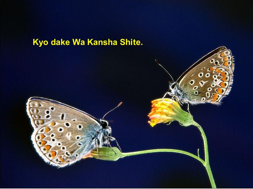 Kyo dake Wa Shimpai Suna.