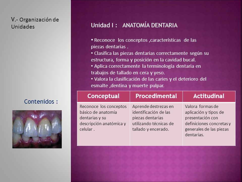 V.- Organización de Unidades Unidad I : ANATOMÍA DENTARIA Reconoce los conceptos,características de las piezas dentarias.