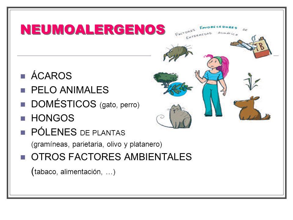 NEUMOALERGENOS ÁCAROS PELO ANIMALES DOMÉSTICOS (gato, perro) HONGOS PÓLENES DE PLANTAS (gramíneas, parietaria, olivo y platanero) OTROS FACTORES AMBIE