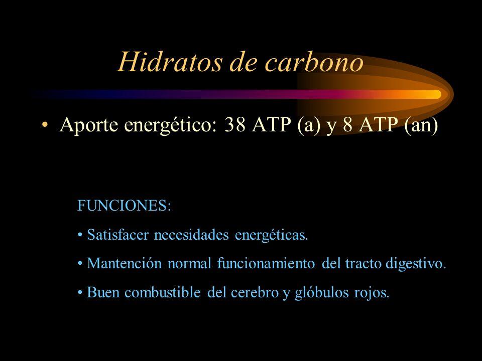 Hidratos de carbono Aporte energético: 38 ATP (a) y 8 ATP (an) FUNCIONES: Satisfacer necesidades energéticas. Mantención normal funcionamiento del tra