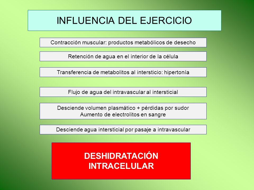 INFLUENCIA DEL EJERCICIO Contracción muscular: productos metabólicos de desecho Retención de agua en el interior de la célula Transferencia de metabol