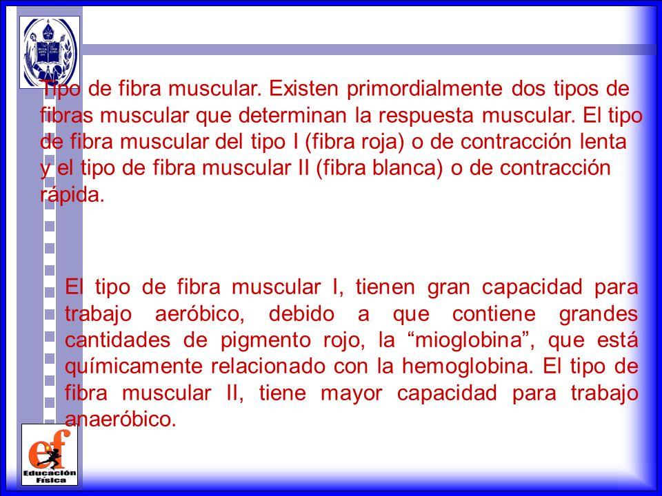 El individuo mesomorfo se caracteriza por tener un desarrollo muscular predominante robusto, huesos largos, brazos y antebrazos musculosos, pecho anch