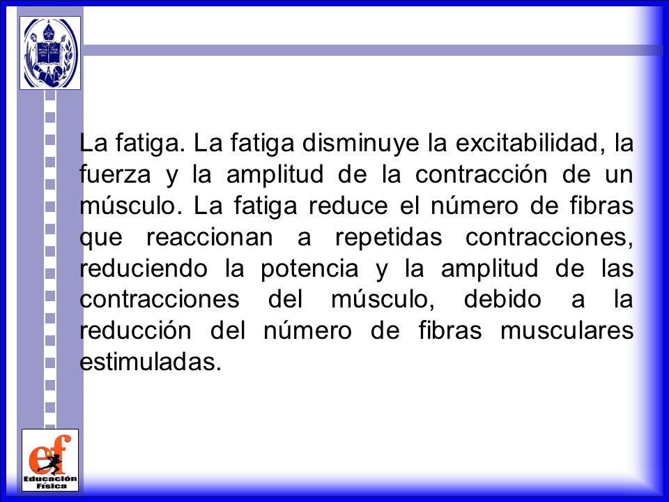 FACTORES QUE DETERMINAN LA FUERZA DEL MUSCULO Ordenamiento de las fibras musculares. La disposición de las fibras en el músculo esquelético, determina