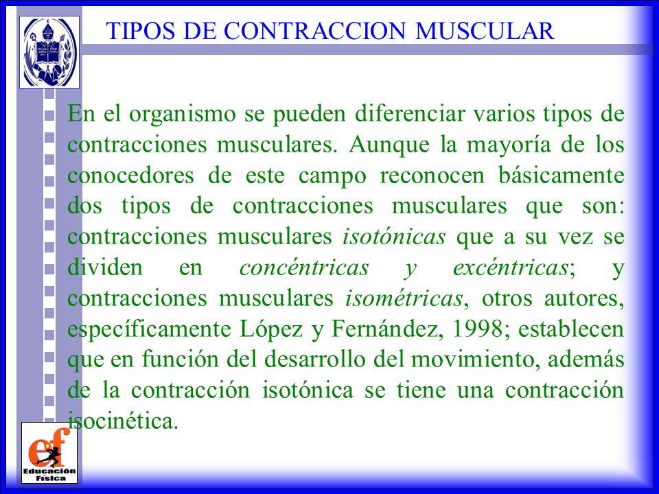 TIPOS DE CONTRACCION MUSCULAR En el organismo se pueden diferenciar varios tipos de contracciones musculares.