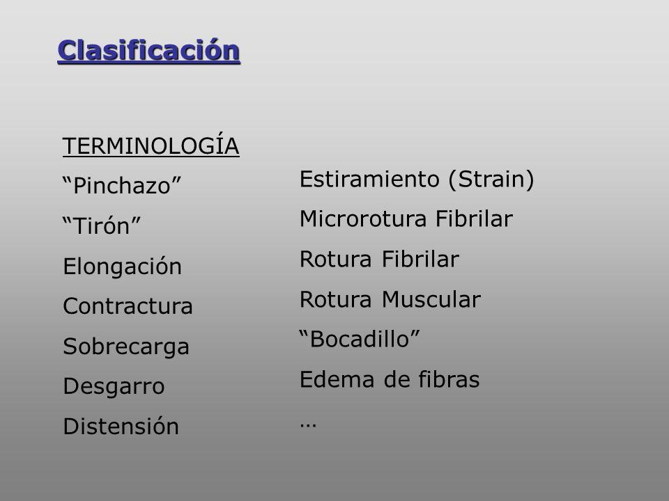 Clasificación -PEETRONS Y SINT ZOFF -GARRET Y TIDBALL -RYAN LESIÓN Tipo I : Estiramiento (= Contractura) LESION Tipo II : Rotura Parcial LESION Tipo III : Rotura Total -PETERSON Y RENSTRÖM LESIÓN Grado I : Afecta menos del 5% de las fibras ms LESION Grado II : Afecta más del 5% de las fibras ms LESION Grado III : Ruptura total del ms Hematoma INTRAmuscular Hematoma INTERmuscular Estiramiento / Contusión / Laceración