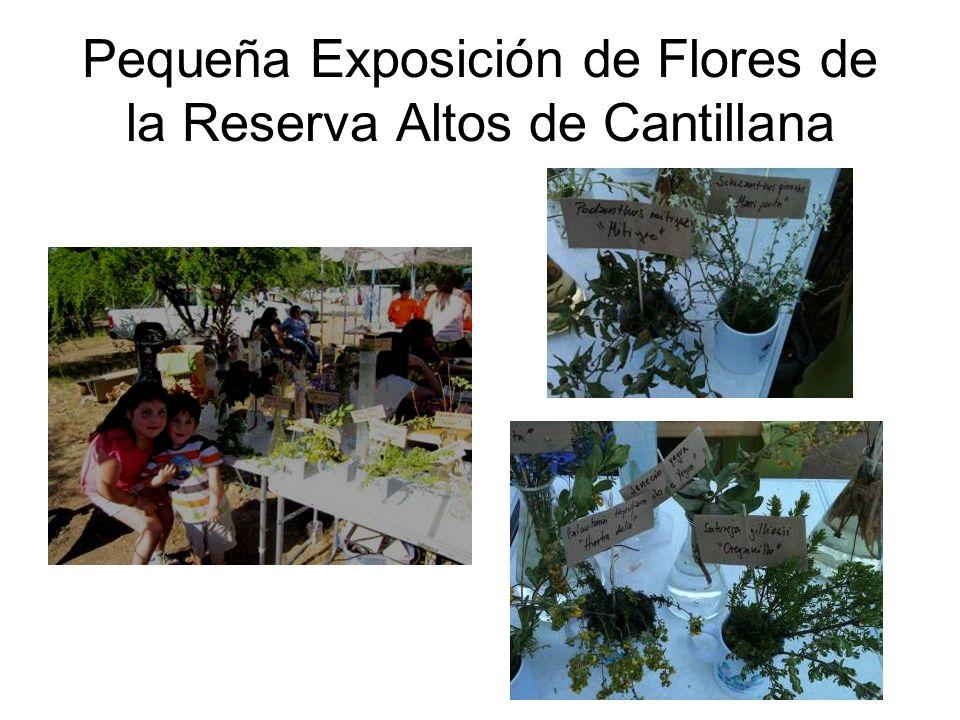 Pequeña Exposición de Flores de la Reserva Altos de Cantillana