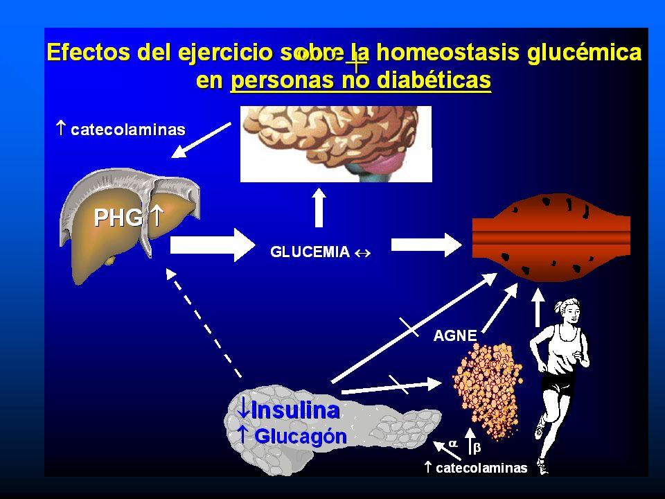 Efectos del ejercicio sobre la homeostasis glucémica en diabéticos tipo 1 con severa insulinopenia Insulina Insulina PHG PHG catecolaminas catecolaminas Captación de glucosa (-) ( + + ) GLUCEMIA GLUCEMIA AGNE AGNE CUERPOS CETÓNICOS