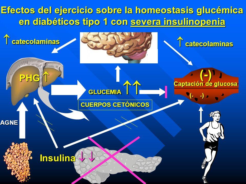 Efectos del ejercicio sobre la homeostasis glucémica en diabéticos tipo 1 con severa insulinopenia Insulina Insulina PHG PHG catecolaminas catecolamin